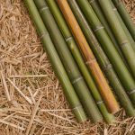 Canne di bamboo lavate colore naturale