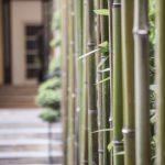 Canne di bambù verdi lavate