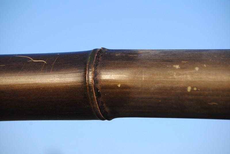 Trattamento antimuffa di una canna di bambù