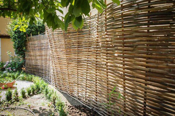 bamboo bambuseto giardino casa corsi separé da vicino