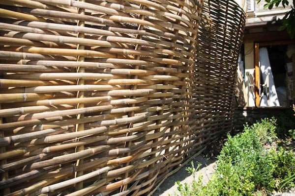 bamboo bambuseto giardino dall'alto